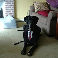 Adopt A Pet :: Chaos - Boonton, NJ