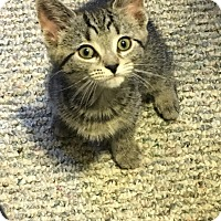Adopt A Pet :: Ellie - Covington, KY