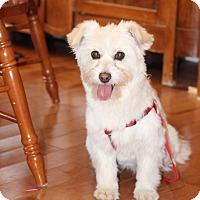 Adopt A Pet :: SIU - Toronto/GTA, ON