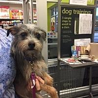 Adopt A Pet :: Lexi - N. Babylon, NY