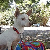 Adopt A Pet :: Bunny - Elk Grove, CA