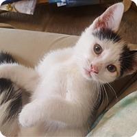 Adopt A Pet :: Cammie - Orange, CA