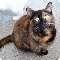 Adopt A Pet :: Parti - Michigan City, IN