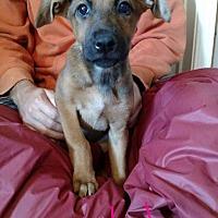 Adopt A Pet :: Delta - Brattleboro, VT