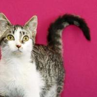 Adopt A Pet :: Carson - Bristol, IN