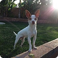 Adopt A Pet :: Twinkie - Los Angeles, CA