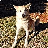 Adopt A Pet :: Leena - Apex, NC