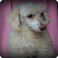 Adopt A Pet :: Enzo - Miami, FL