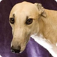 Adopt A Pet :: Forrest - West Palm Beach, FL