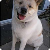 Adopt A Pet :: Kinako - Hayward, CA