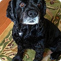 Adopt A Pet :: Chanelle - Toronto, ON