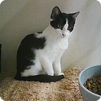 Adopt A Pet :: Pippa - Riverhead, NY