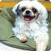 Adopt A Pet :: Topanga - Cotati, CA
