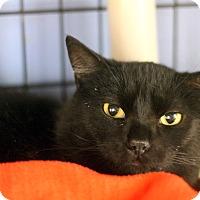 Adopt A Pet :: Vermont - Chicago, IL