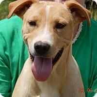 Adopt A Pet :: Bacon(35 lb) New Pics & Video! - SUSSEX, NJ