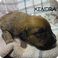 Adopt A Pet :: Kendra - Batesville, AR