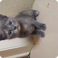 Adopt A Pet :: Zelena - Randleman, NC