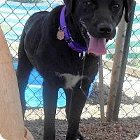 Adopt A Pet :: Kirby - Oskaloosa, IA