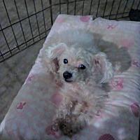 Adopt A Pet :: Juban - Killian, LA