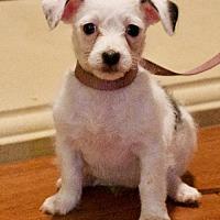 Adopt A Pet :: Astoria's Soho - Palo Alto, CA