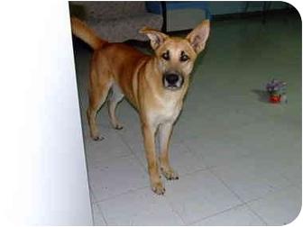 German Shepherd Dog Mix Dog for adoption in Batavia, Ohio - Rocky