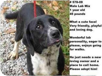 Labrador Retriever Mix Dog for adoption in Zanesville, Ohio - # 578-09 - ADOPTED!