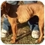 Photo 2 - Vizsla Mix Dog for adoption in North Judson, Indiana - Zena