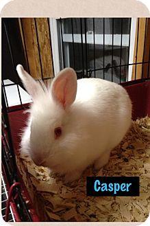 Lionhead Mix for adoption in Lower Burrell, Pennsylvania - Casper