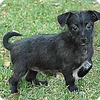 Adopt A Pet :: Howard - La Habra Heights, CA