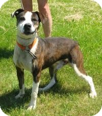 American Pit Bull Terrier Mix Dog for adoption in Mineral, Virginia - Mickey