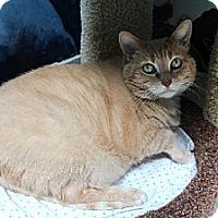 Adopt A Pet :: Sophie - Newport Beach, CA