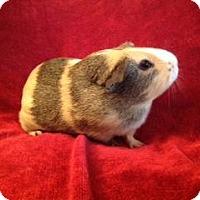 Adopt A Pet :: Meadow - Williston, FL