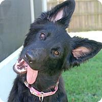 Adopt A Pet :: Karlie - Ormond Beach, FL
