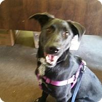 Adopt A Pet :: Loki - Henderson, KY