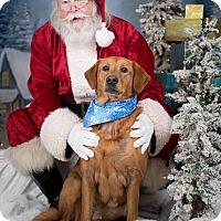 Adopt A Pet :: Jules - Virginia Beach, VA