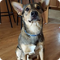 Adopt A Pet :: Dude (pending) - Treton, ON