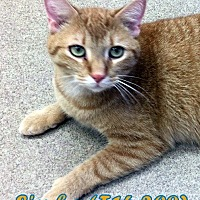 Adopt A Pet :: Simba - Tiffin, OH