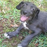 Adopt A Pet :: A - MONTY - Burlington, VT