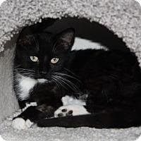 Adopt A Pet :: Jyn - Mission, KS