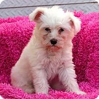 Adopt A Pet :: Pai - Los Angeles, CA
