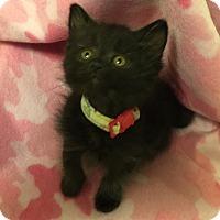 Adopt A Pet :: Ramla - Colorado Springs, CO