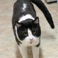 Adopt A Pet :: Komodo - Long Beach, WA