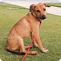 Adopt A Pet :: Poppy - Huntington Beach, CA
