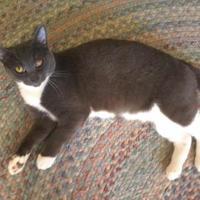 Adopt A Pet :: Snowflake - Kinston, NC