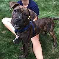 Adopt A Pet :: Hank - Wethersfield, CT