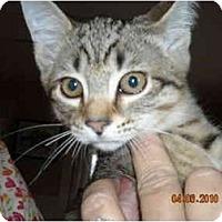 Adopt A Pet :: Charles - Riverside, RI