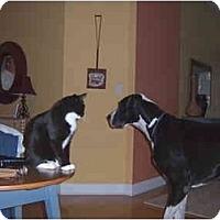 Adopt A Pet :: Minnie - Jacksonville, FL