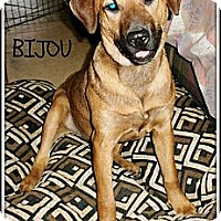 Adopt A Pet :: Bijou - Silsbee, TX