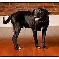Adopt A Pet :: Mudderz - Owensboro, KY