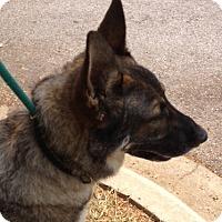 Adopt A Pet :: Rebel - Pike Road, AL